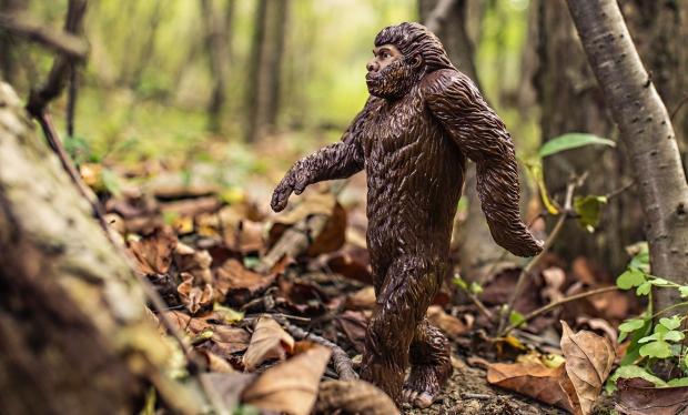 animal-bigfoot-evolution-4075-e1528460443984.jpg